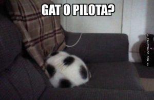 imatge d'un gat blanc i topus negre com una pilota de futbol.